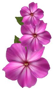 flores direito